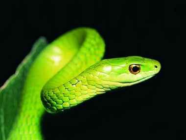 """蛇趣之""""青蛇"""""""